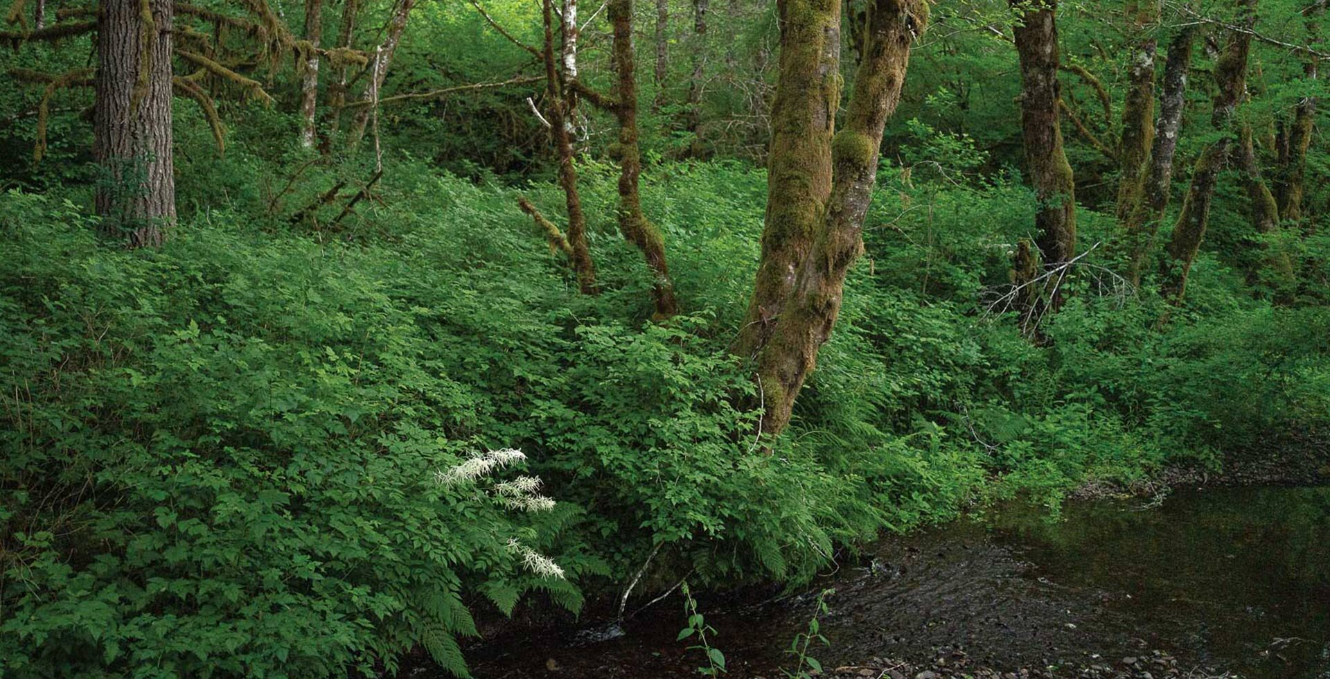 At more than 1,000 acres, the Hyla Woods experimental forestry in northwest Oregon seeks to illuminate ways in which people and forests can coexist sustainably.